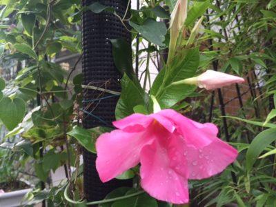 雨上がりの花